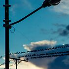 Swallows on the wires 6 by RichardPhoto