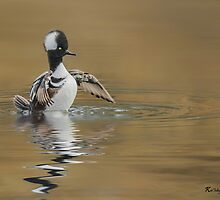 Hooded Merganser (Male) by KatMagic Photography