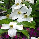 Dogwood by Fondue