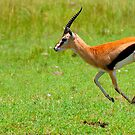 Antelope by Charuhas  Images