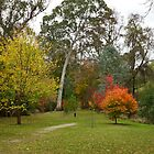Autumn at Buchan Caves Campground - Buchan Caves, Victoria, Australia by PC1134
