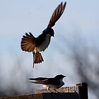 Tree Swallows mating #5 by Kane Slater