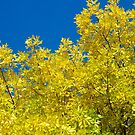 Yellow Against Blue by lindsycarranza