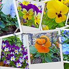 Pansy Collage by Susan S. Kline