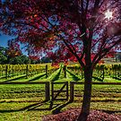 Centennial Winery, Bowral, NSW by Stephen  Jarrett