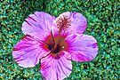 Floating Hibiscus in HDR by Tori Snow