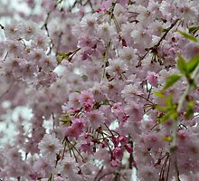 Pink and White Petals by TinyHat