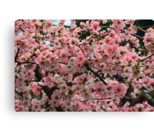 Pretty in Peach 2 Canvas Print