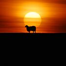 Sheep in the Sunset by baz94