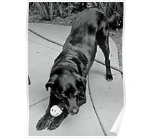 A Dog and Her Ball Poster