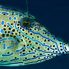 Scribble Filefish by Karen Willshaw