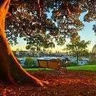 Sydney Harbour Sunrise by S T