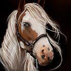 Soul Seeker Horse Art  by Concetta Kilmer