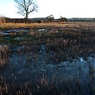 A Field in Winter by Richard Flint