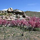 Spring in the Desert,Cold Springs,(Reno),NV USA by Anthony & Nancy  Leake