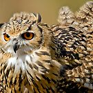 Bengal Eagle Owl by M.S. Photography & Art