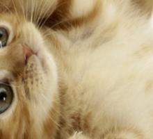 A Cute Cat Sticker