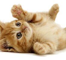 A Cute Cat by calpo