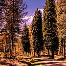 Forest trail by JEZ22