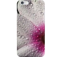 Phlox 1 iPhone Case/Skin