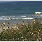 Springtime In Southern California by Betsy  Seeton