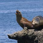 CHATTING SEA LIONS by Betsy  Seeton