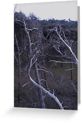Skeleton Trees by damianaashe
