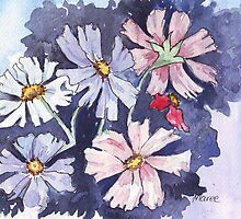 Cosmos beauty by Maree  Clarkson