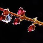 Water Droplets On A Tiny Stem of Seed Pods by Gabrielle  Lees