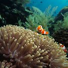 Nemo by marcokernler