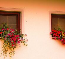 Cottage Windows by EvaMarIza