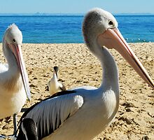 Pelican Watch by Emily McAuliffe