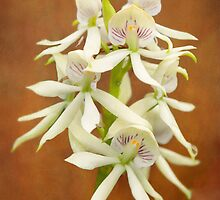 Flower - Orchid - A gift for you  by Mike  Savad