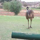 Emu by James Dart Golf Club B H by Heather Dart