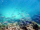 Underwater Blues by globeboater