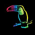 Rainbow Toucan on Black by pjwuebker