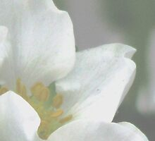 Scent of Strawberry Blossoms in the Air by AngieDavies