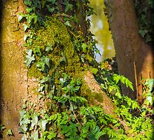 Ivy on a Tree by mlphoto