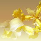 Lemon zest'... by Valerie Anne Kelly