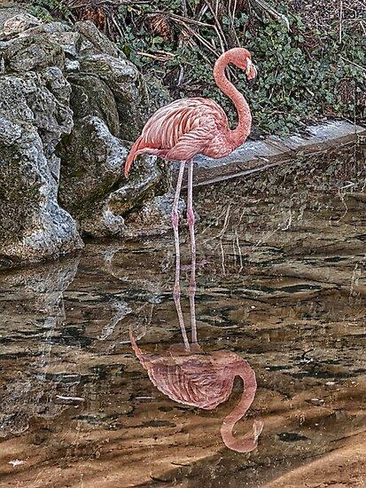 Flamingo by Glen Allen