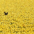 Brave bird by Javimage