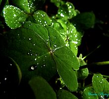 Water droplets by mariusvic