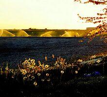 A.M. At My Home.../Caldwell, Idaho by trueblvr