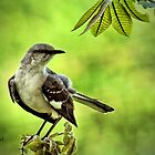 """Pretty Mocking Bird"" by Melinda Stewart Page"