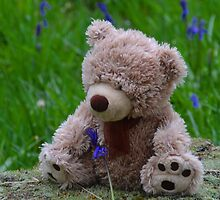 A Bear In Bluebell Wood by lynn carter