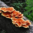 Chicken of the Woods by Sheri Nye