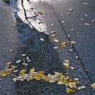9/5 the small leaves of autumn by Evelyn Bach