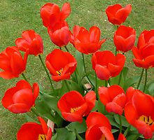 Bright and cheerful (tulips) by Sue Gurney
