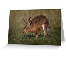 Hare On The Hop Greeting Card
