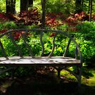 Bench in  the Azalea Garden by KellyHeaton